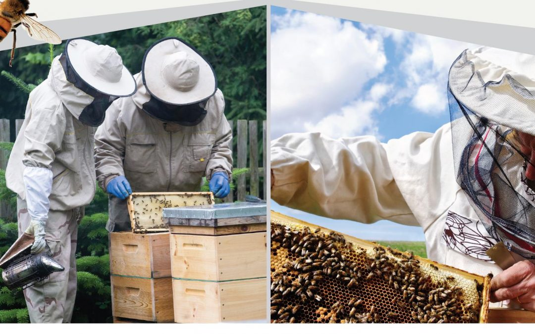 Continuing Education Course on Beekeeping